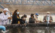 Proyecto de Ayllu Solar en Camarones arranca con producción de truchas